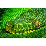 Posters: Snakes Poster Art Print - Side-Striped Palm Viper, Bothriechis Lateralis II (47 x 31 inches)
