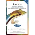 Geckos: Day Geckos, Tokay Geckos Plus New Caledonians and More!