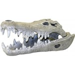 Exotic Environments Nile Crocodile Skull Aquarium Ornament, Small, 3-Inch by 6-Inch by 2-1/2-Inch