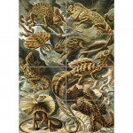 Nature Ernst Haeckel Iguana Lizard Biology Germany Vintage AD Poster OZ3613
