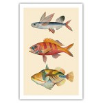 Fish of Hawaii Triptych - Flying Fish (Malolo), Hawaiian Ruby Snapper Onaga (Ula'ula), Reef Triggerfish (Humuhumunukunukuapua'a) - Waikiki Hawaii A...
