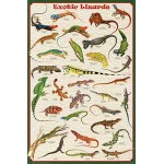 Exotic Lizards Reptiles Educational Science Chart Poster Collections Poster Print, 24x36