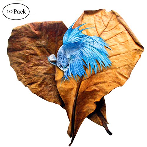 SunGrow Betta Leaves, 9 Inches Long, Induce Breeding and Boost Immunity, Reduce Stress, No Toxic Chemicals Added, for Playing and Hiding, Easy to U...