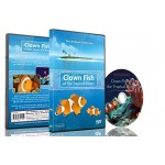 Tropical Fish DVD - Clown Fish of the Tropical Ocean